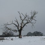 Snowy Hampstead Heath